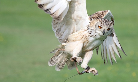 One-Hour Owl or Falconry Experience for One or Two at Hawk on the Wild Side, Multiple Locations (Up to 60% Off)